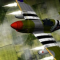 Wings of War Icon